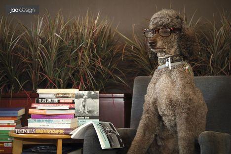 Design Voor Honden : Hotdog designs hondsdol