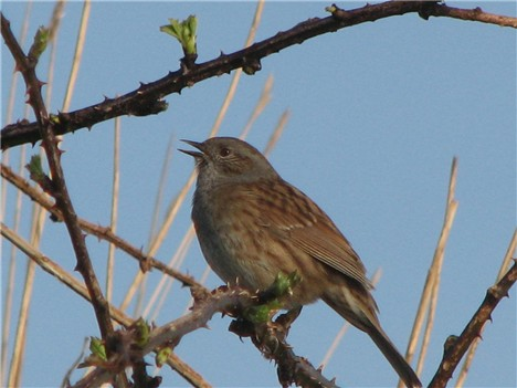 Vogels Nederland Tuin : Tuinvogels tellen in teylingen u de teyding